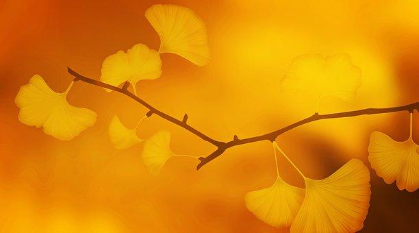 Equinoxe d'automne, équilibre entre la lumière et l'obscurité.